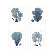 "Set of 4, Navy Blue Sea Coral Fans Naturalist Collection 8""x10"" Prints o"