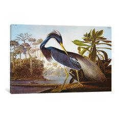 """""""Louisiana Heron From """"Birds of America"""""""" by John James Audubon, 60x40x1.5"""""""