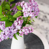 Get Lilacs! And 6 More Ways to Make the Most of This Weekend
