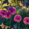Meraviglie: Come Cambia un Giardino Olandese in 4 Stagioni