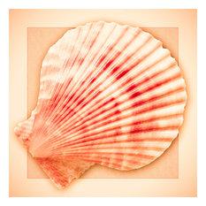 "Shell Design, Fine Art Paper, 16""x16"""