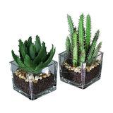 Artificial Cactus and Aloe Vera Plants in Glass Pots
