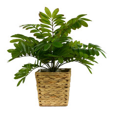 """Cycad in Basket, 23"""""""