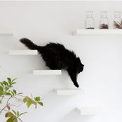 quality living with catsさんの写真