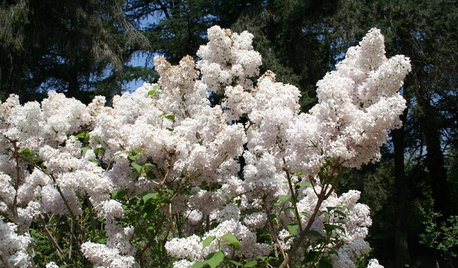 Pacific Northwest Gardener: What to Do in April