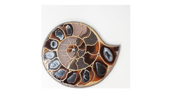 Créations murales ammonite