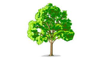 Tree Service Cypress TX