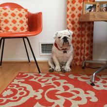 Kan det gøre dig gladere at have hund i hjemmet?