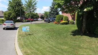 Hedge trim + Lawn care