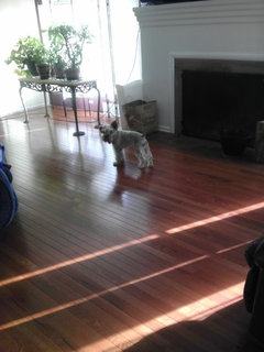 What Is Most Important To You When Choosing A Hardwood Floor