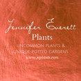 Jennifer Everett Plants's profile photo