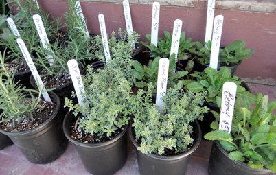 Northeast Gardener's January Checklist