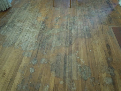 cat pee turned hardwood floors black