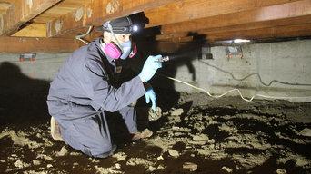 Termite Inspection Sunnyvale