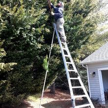 Garden Services & Lawn Maintenance