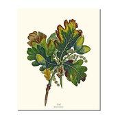 Vintage Botanical Tree Leaf Art Print: Oak