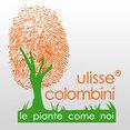 Foto di profilo di Società Agricola Colombini Ulisse srl