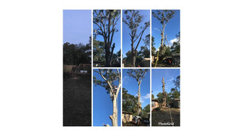 Before & After Tree Trimming in Orange City, FL