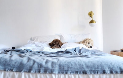 Pet's Place: Lessons Learned by Labradoodle Owners