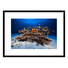 """""""Marine Life"""" Framed Digital Print by Barathieu Gabriel, 30x22"""""""