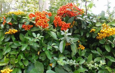 Planta especies de bayas en el jardín y disfruta de sus colores