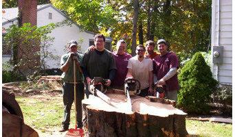 GRB Tree Cutters