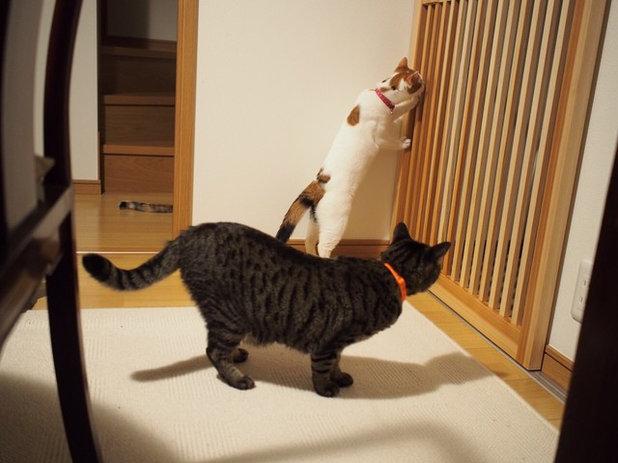 和モダン ダイニング by 猫と建築社