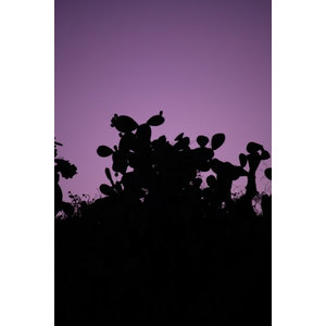 """Purple Sunset"" Photo Print, Canvas Print, 40x60 cm"