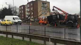 Large Fallen Oak dismantle