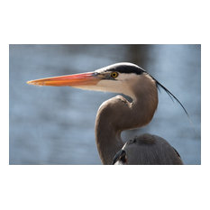"""Great Blue Heron"" 5x7 Photography by Alix Collins"