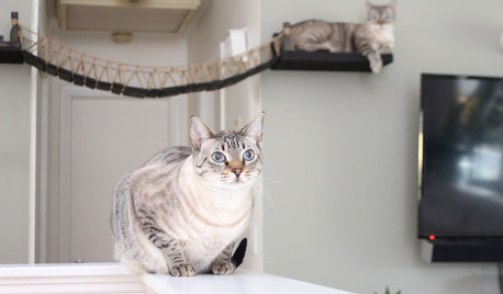 猫好きが暮らす7つの家