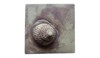 Turban Snail 3D Shell