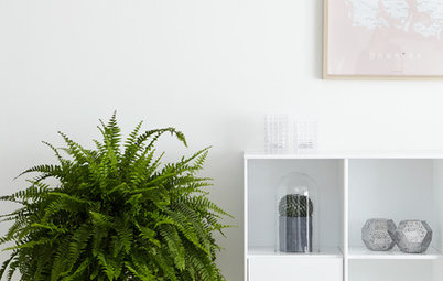 Get to Know Boston Fern, a Plant That's Always in Style