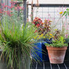 How to Right-Size Your Garden and Simplify Your Life