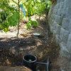 Grow a Beautiful Garden With Ecofriendly Greywater