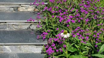 Verbena rigida, slate steps