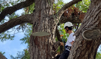 Tree Preservation Project