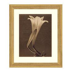 """Single Lily"" Sepia Tone Framed Photo, 18""X24"""