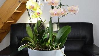 Pot de fleur connecté pour orchidées