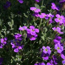 Växter för solig slänt