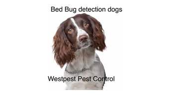 Westpest Pest detection dogs ( Bed Bugs/