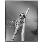 """Pi Photography and Fine Art - """"Dragonfly at Bombay Hook B and W"""" Unframed Wall Art Print, 11""""x14"""" - """"Dragonfly at Bombay Hook Black & White"""" Wildlife Photography - Luster Photo Paper Unframed Wall Art Print"""