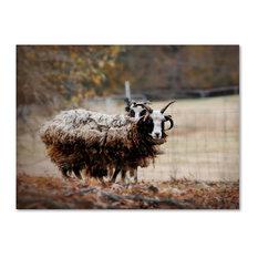 Jai Johnson 'Woolly In Autumn Jacob Sheep' Canvas Art, 19 x 14