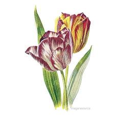 """Tulip"" Botanical Print, 38x59 cm"