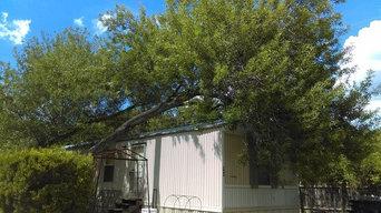 Fallen Tree Removal in Live Oak, TX