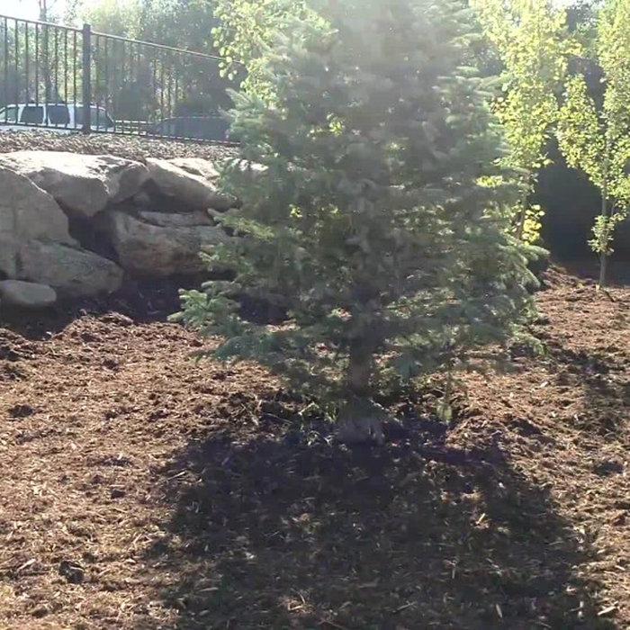 Complete Backyard Renovation Video