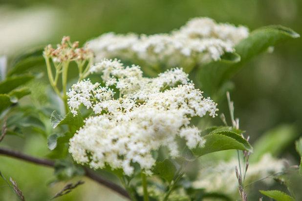 Suivez le guide un arbre magique et une r colte de miel for Arbre qui pousse rapidement