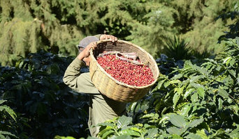 Houston Coffee Co. 2019 Crop Now Available / Private Label and Bulk Services