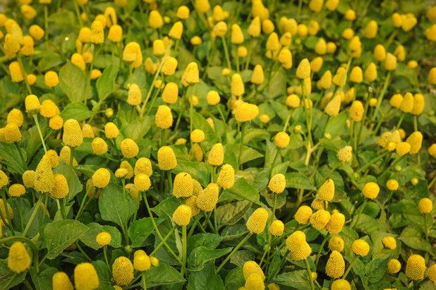 by Baker Creek Heirloom Seeds