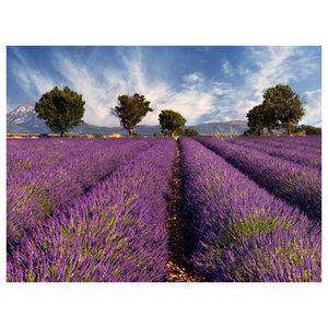 Lavender Field Wallpaper, 300x231 cm